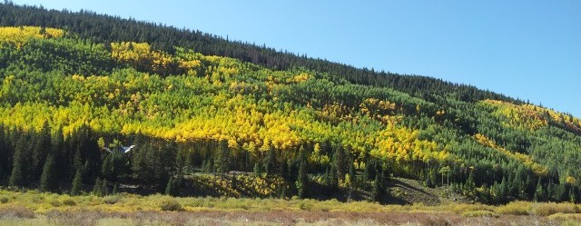 aspens changing fall 2012